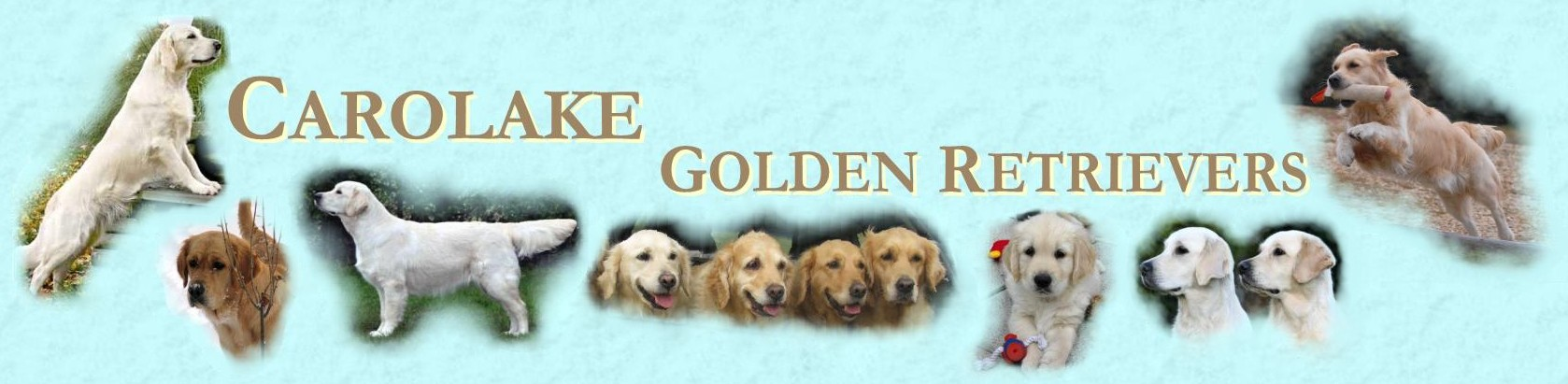 The Carolake Golden Retrievers