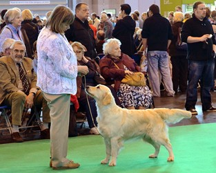 Penny and Bliss competing at Crufts 2012