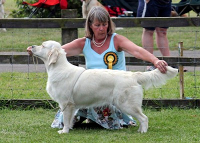 Sylvie winning Best Puppy Bitch at the Golden Retriever Club Championship Show 2014